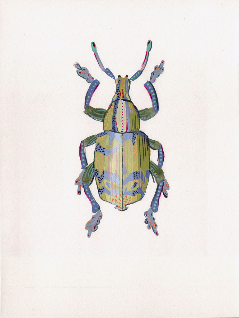 Eupholus Beetle 1 - Little Bugs Collection