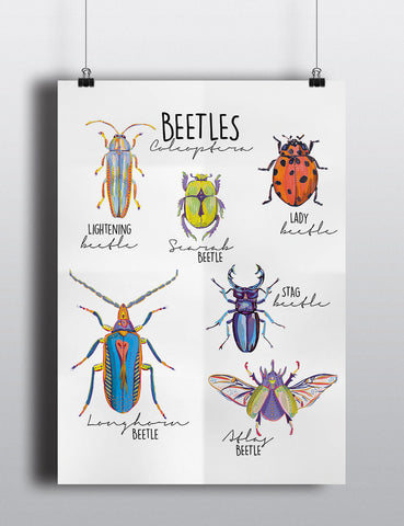 Beetle Poster - Mixed Bug Large Print - Little Bugs Collection