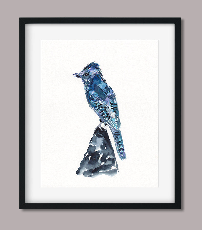 Blue Jay - Aviary Collection