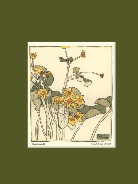 Overbeck - Marsh Marigold