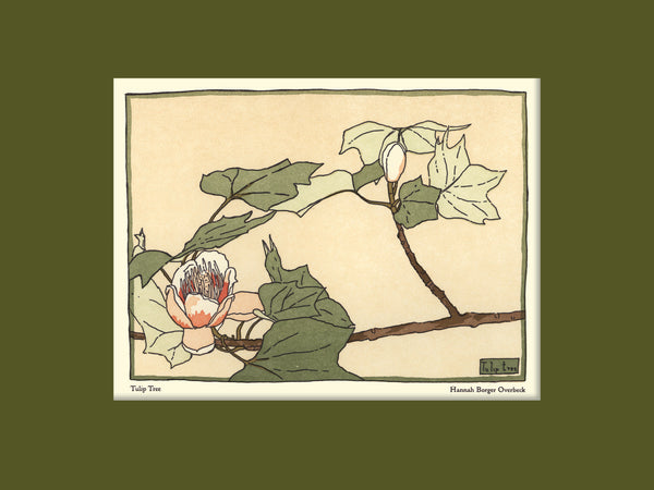 Overbeck - Tulip Tree