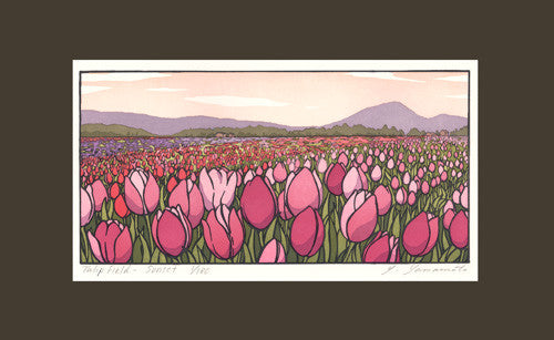 Tulip Field - Sunset