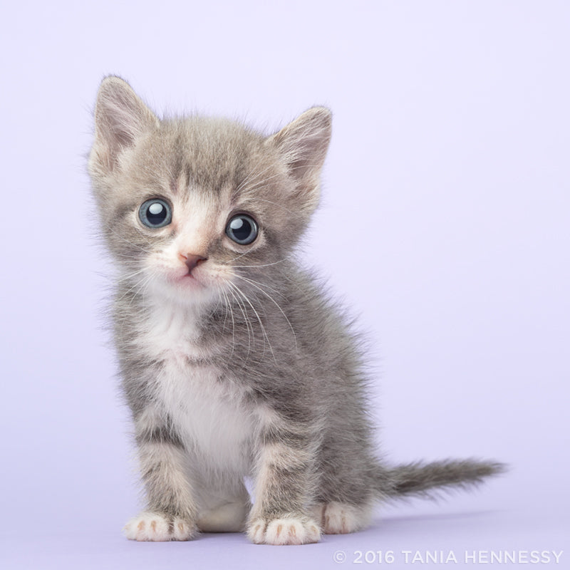 Tiny Kitten Photography by Tania Hennessy