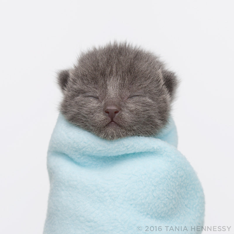 Kitten Purrito by Tania Hennessy