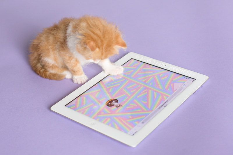 Kitten playing with Doughnut Kitten on an iPad