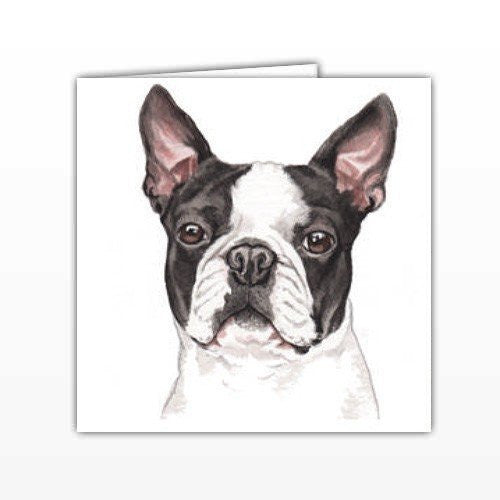 Boston Terrier Dog Greeting Card - by UK Artist Christine Varley's Original Watercolor painting