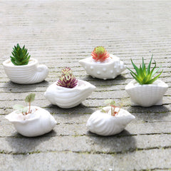 Ceramic Seashell Planter Set