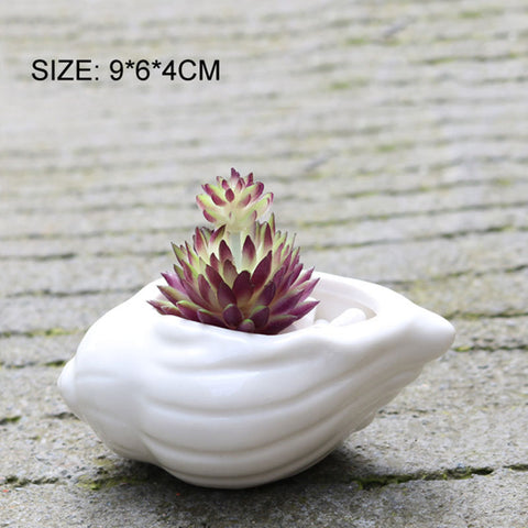 Image of Ceramic Seashell Succulent Pots