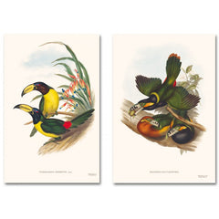 JOHN GOULD: THE FAMILY OF TOUCANS