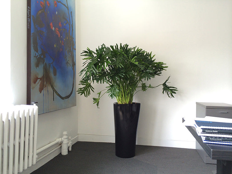 Intercept Pharmaceuticals Office Plant Project