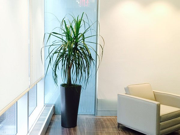 Cppib America Office Plant Project