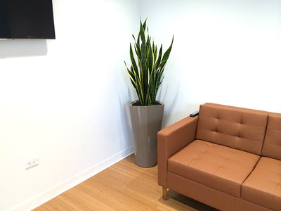 Bison Capital office plant project
