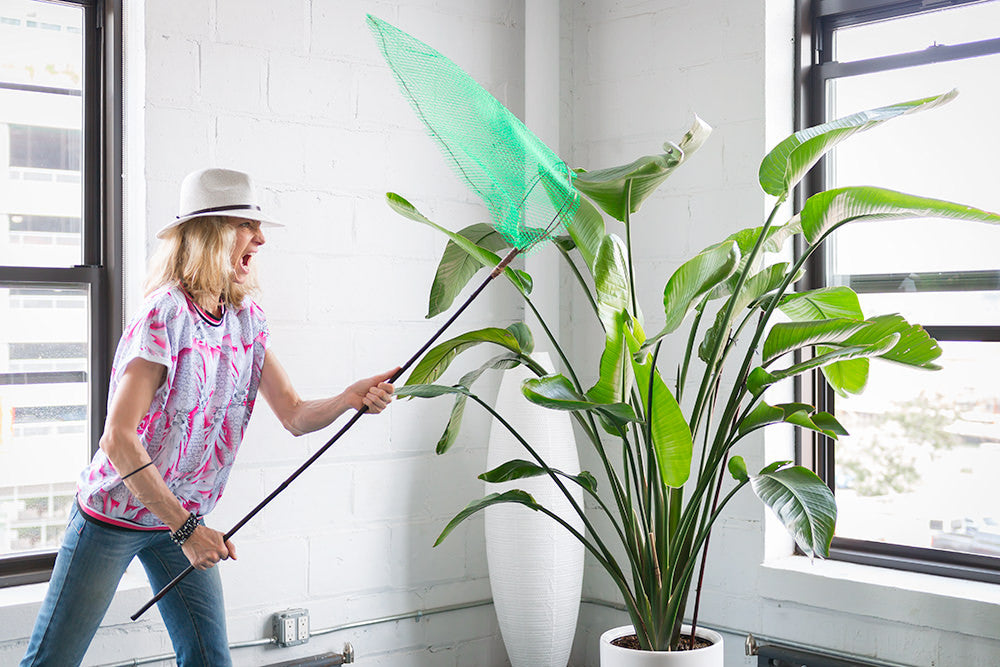 How To Get Rid Off Gnats In Potted Plants