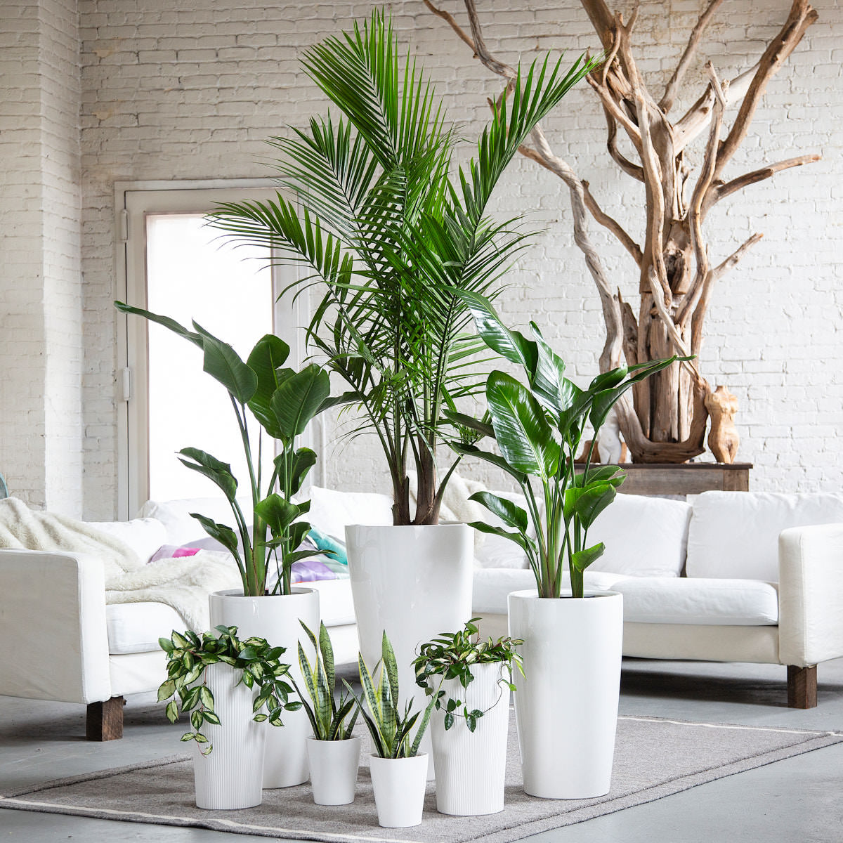 Home Plant Buying Guide