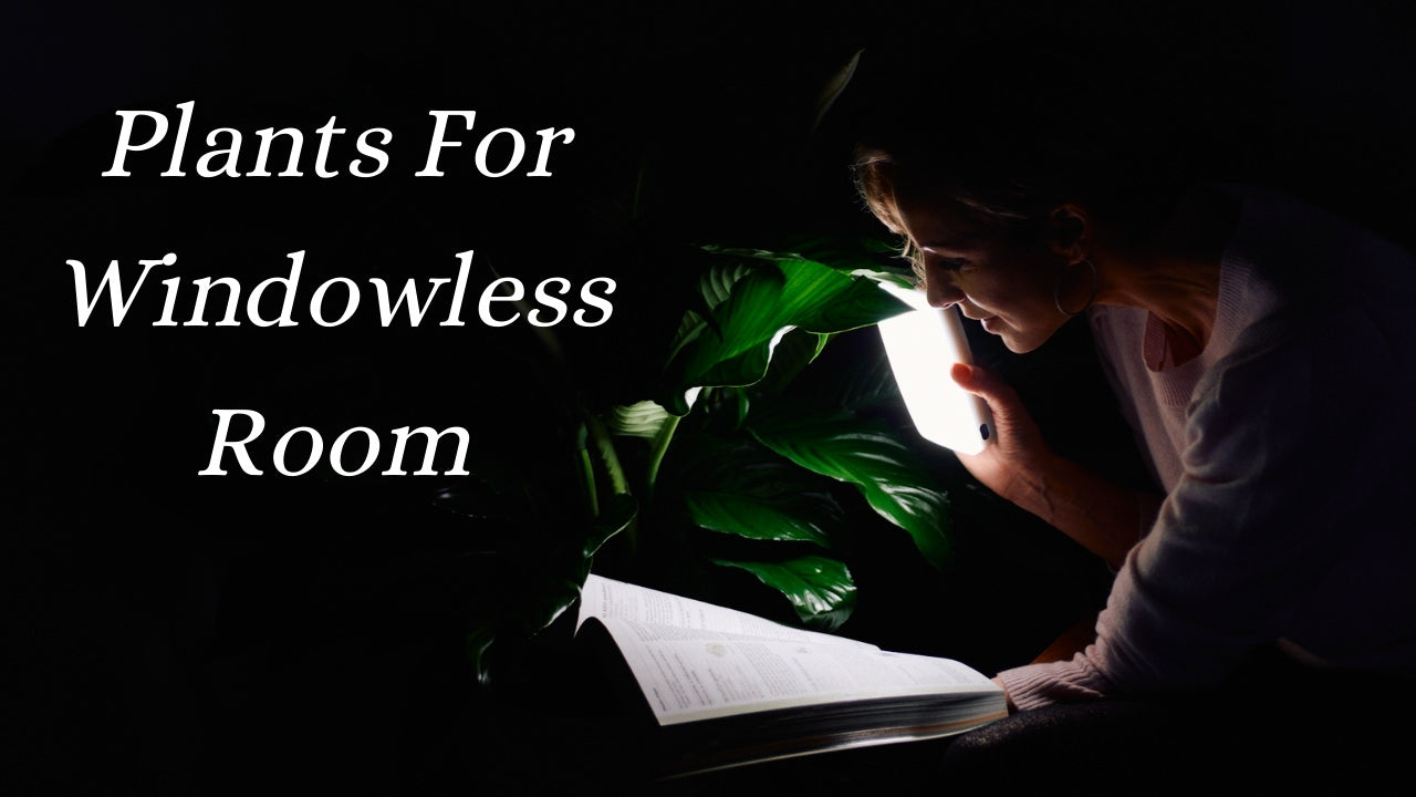 Plants for windowless room