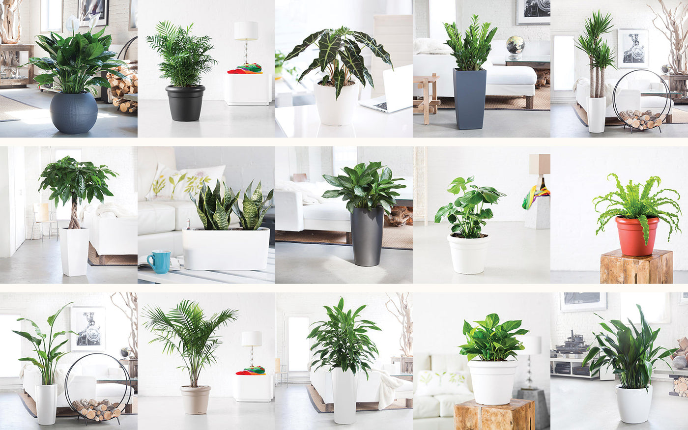 Indoor Plants Nyc Office And House Plant Delivery Service In New York Love Potted Decorative Beautiful For Your Home Or