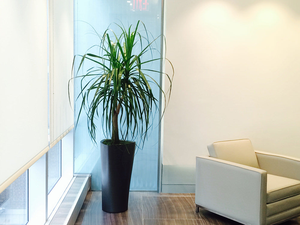 best office plant maintenance NYC