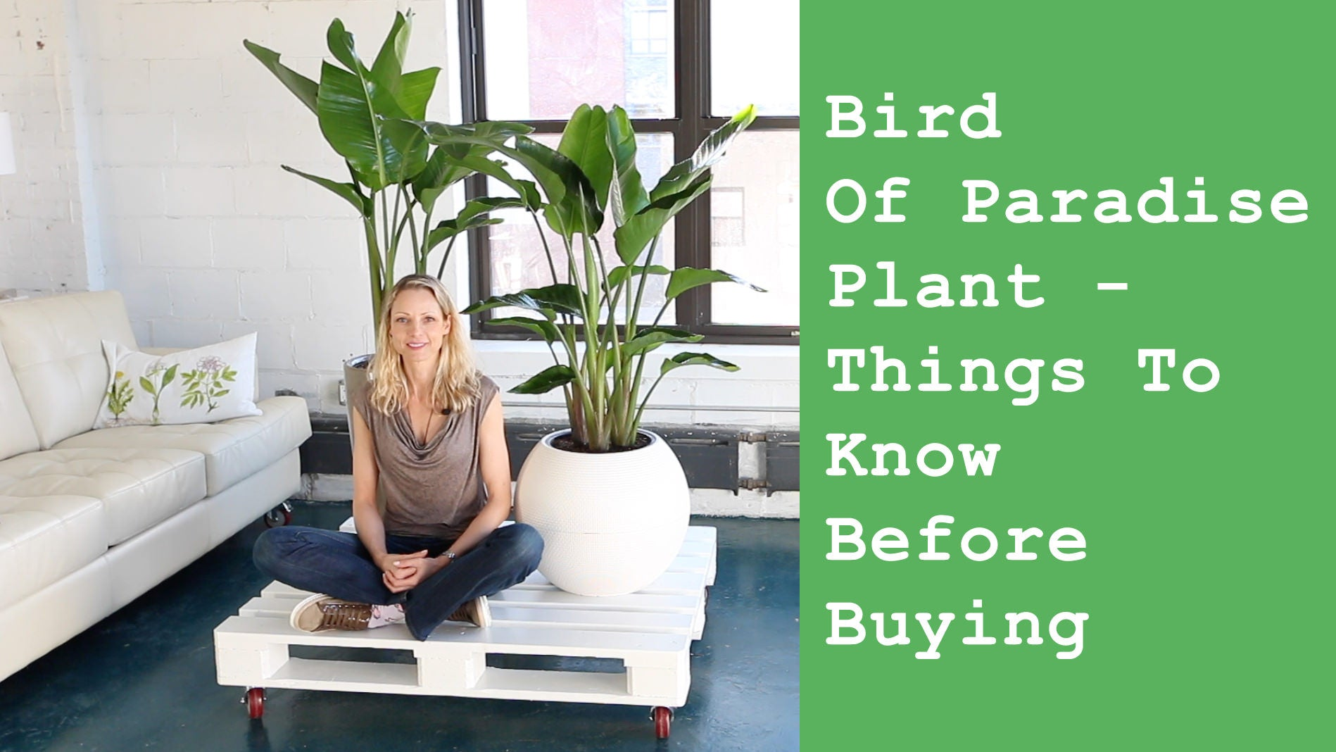 Bird of Paradise plant video