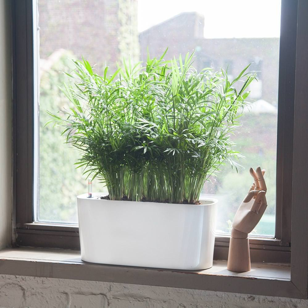 Plant Light Guide | Low to High Light Plants | My City Plants