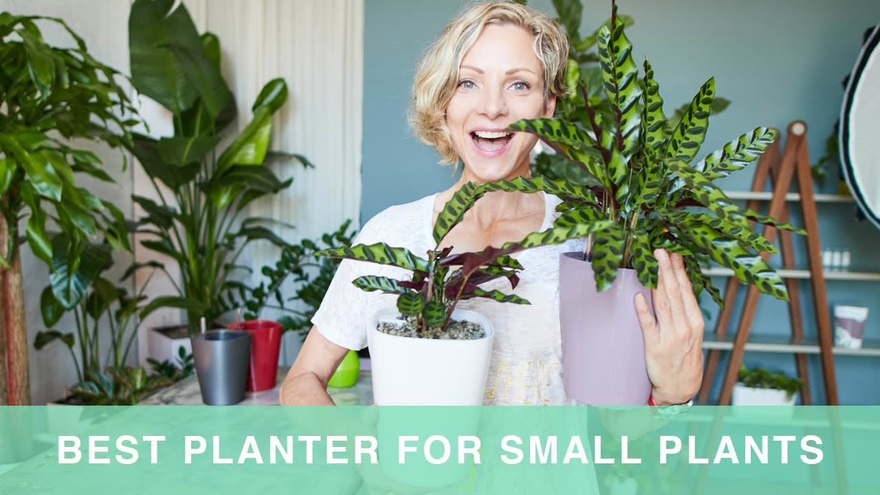 How to pot plants in Lechuza Deltini planters