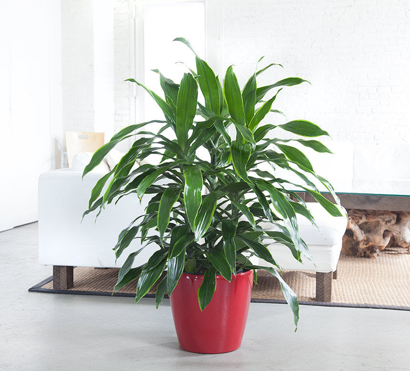 28 best easy care indoor plants sunset easy care for Easy to take care of indoor plants