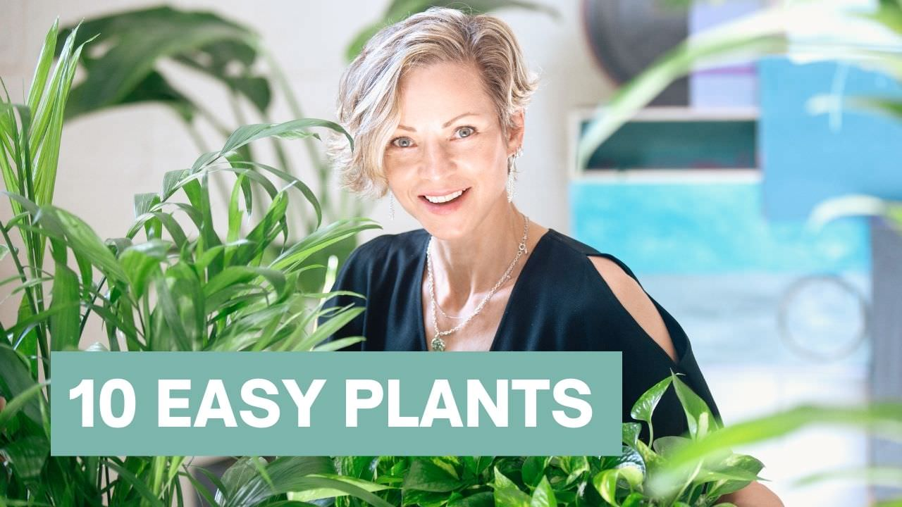 Easy plants for beginners