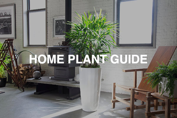 Home plant guide