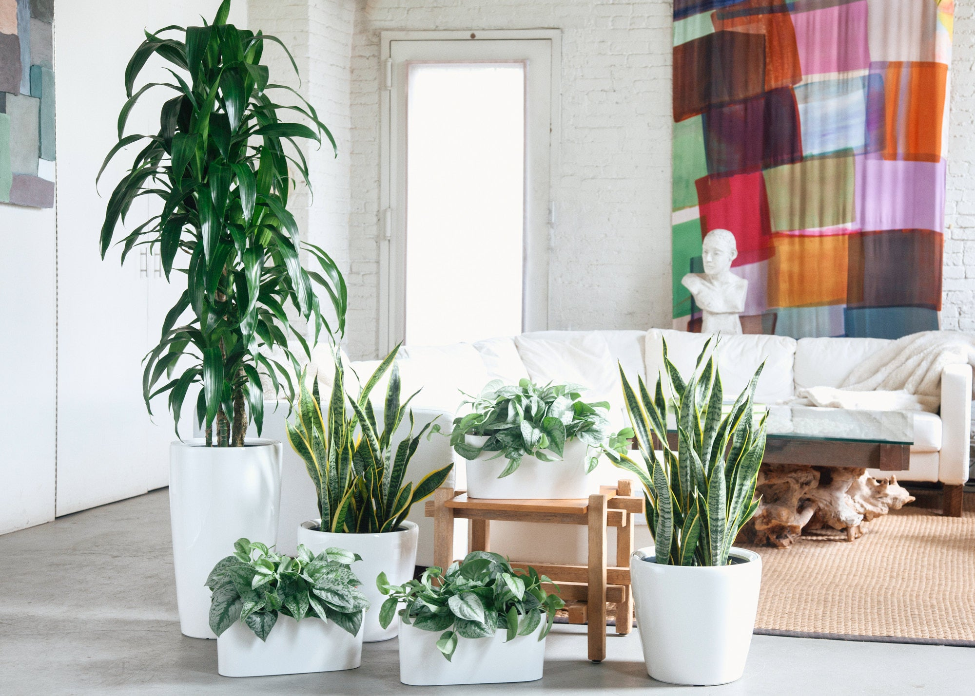 Houseplant Delivery NYC  & NJ - My City Plants