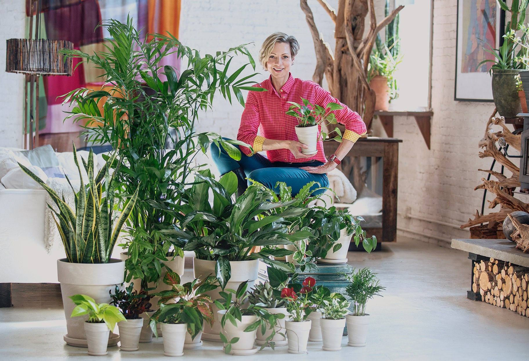 Houseplant Delivery NYC - Plant Shop In New York - Order Plants Online