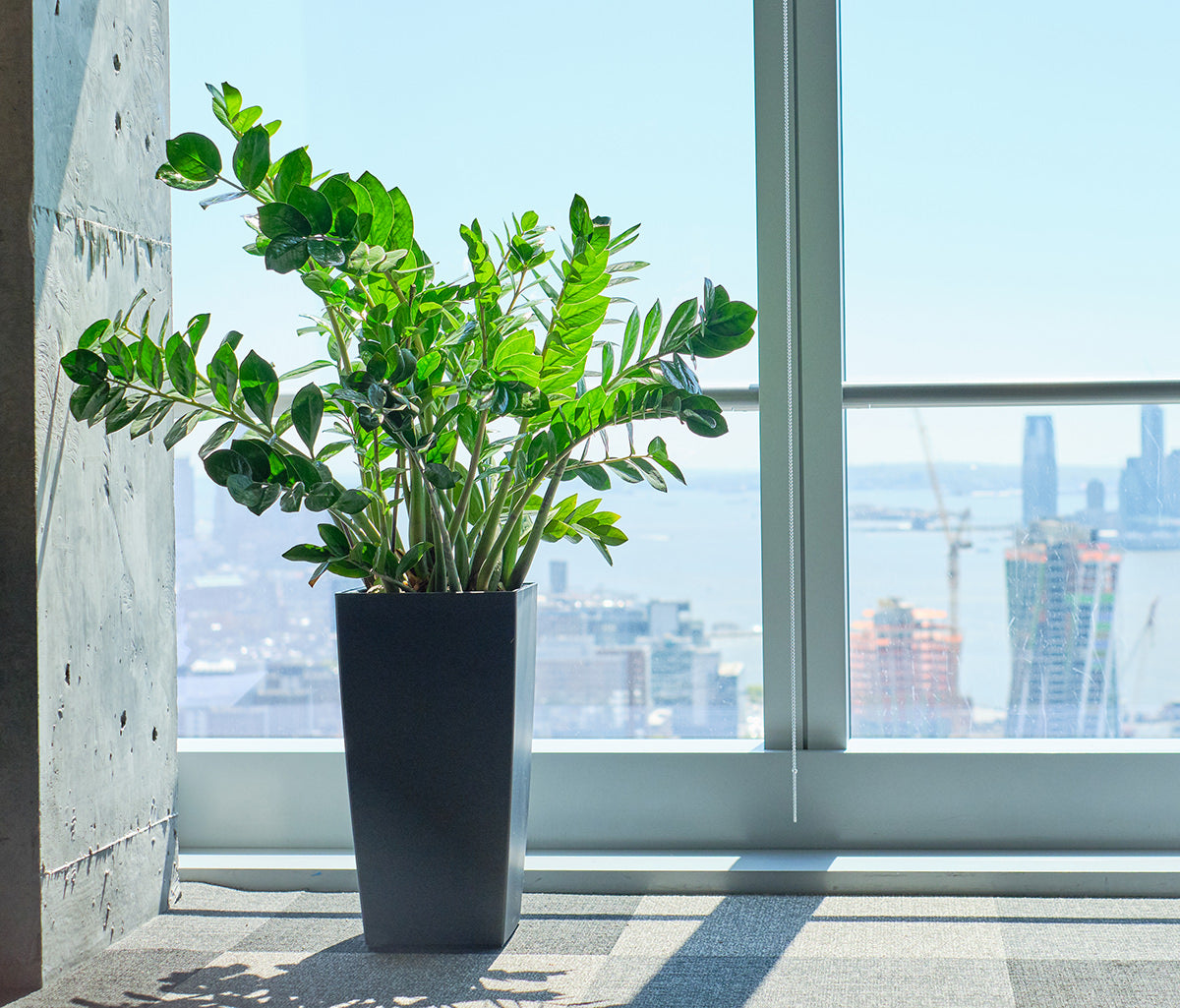 How to choose the right plants for your office