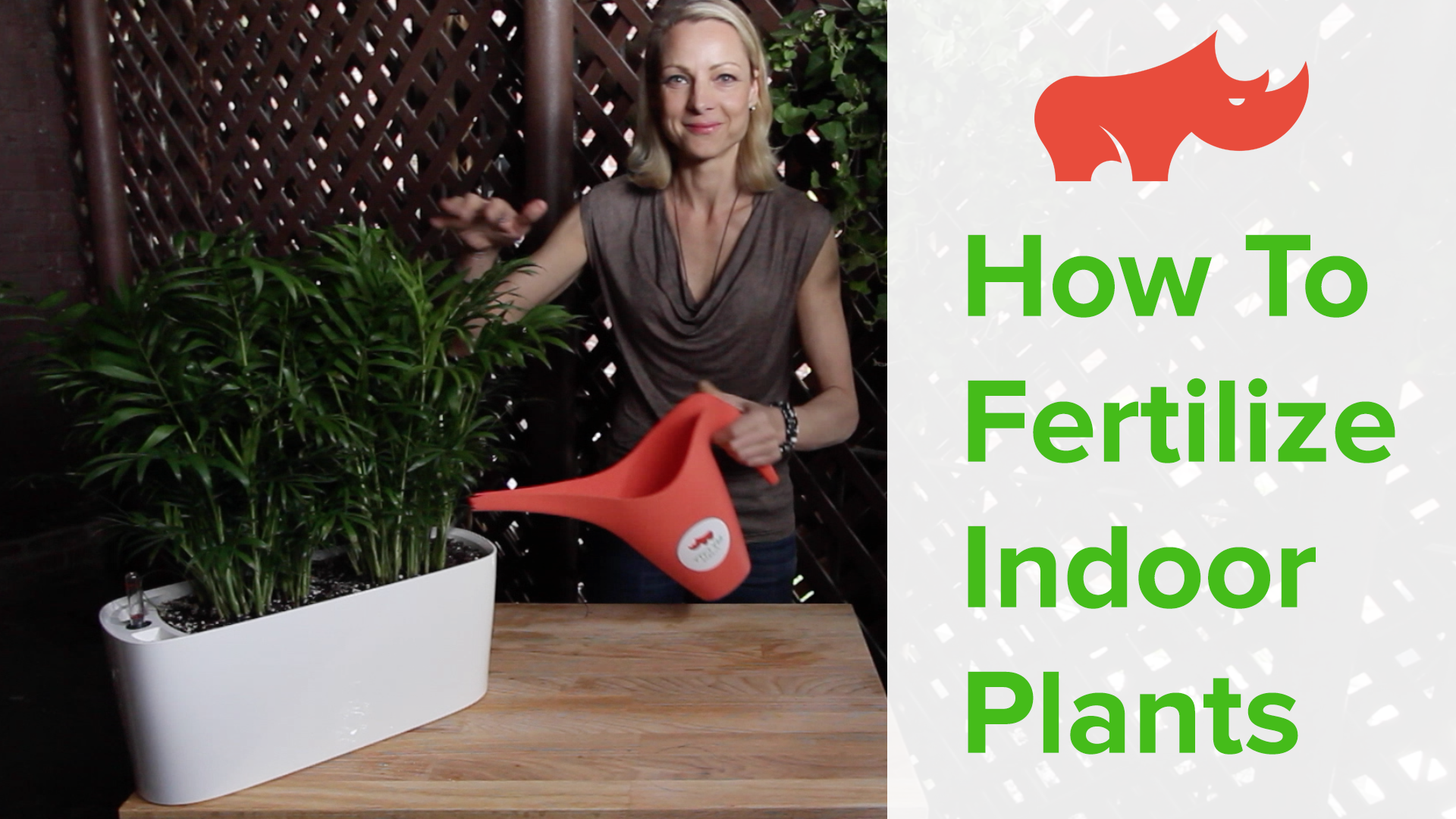 How To Fertilize Indoor Plants