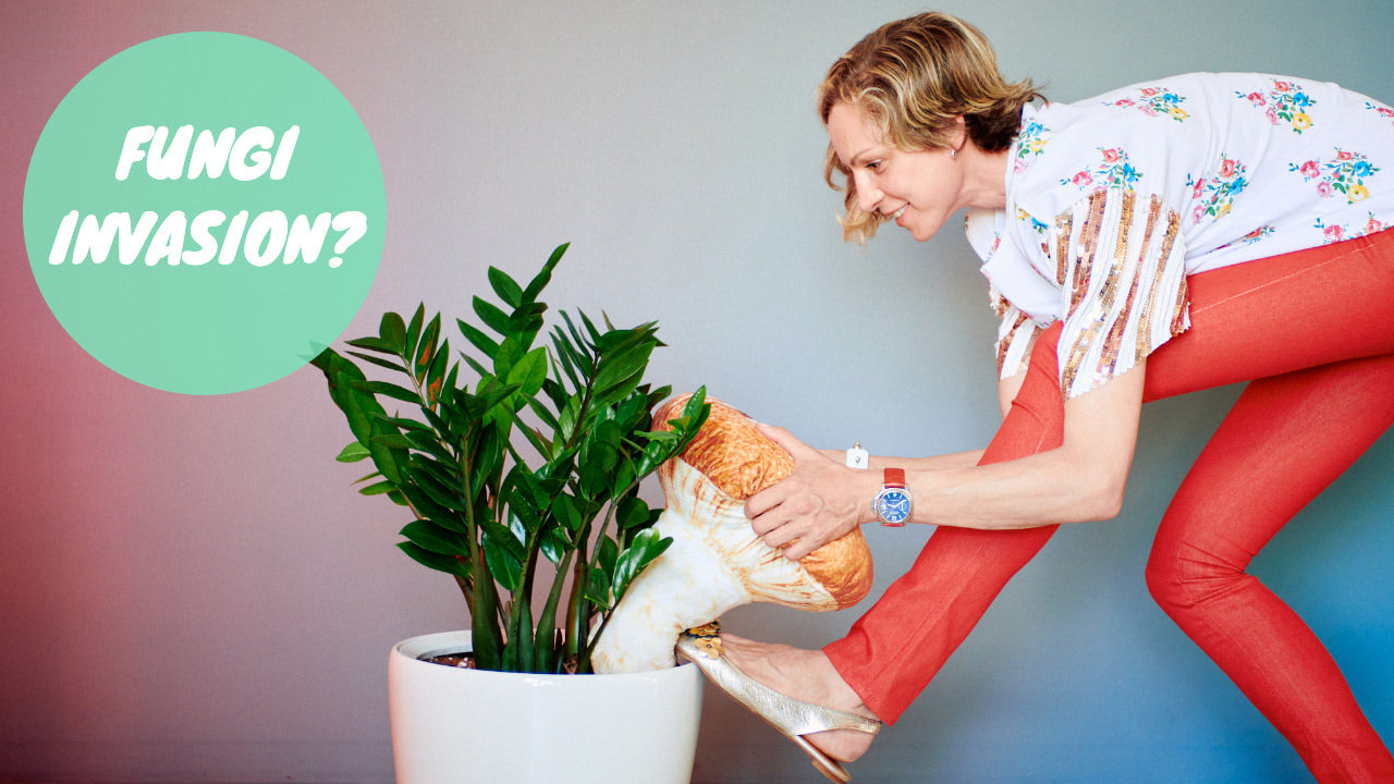 How to get rid of mushrooms in houseplants