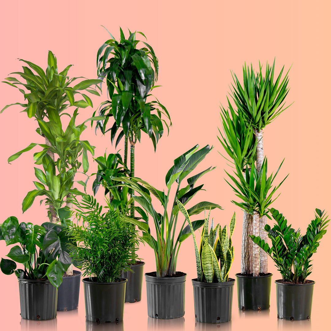 plants in nursery pots