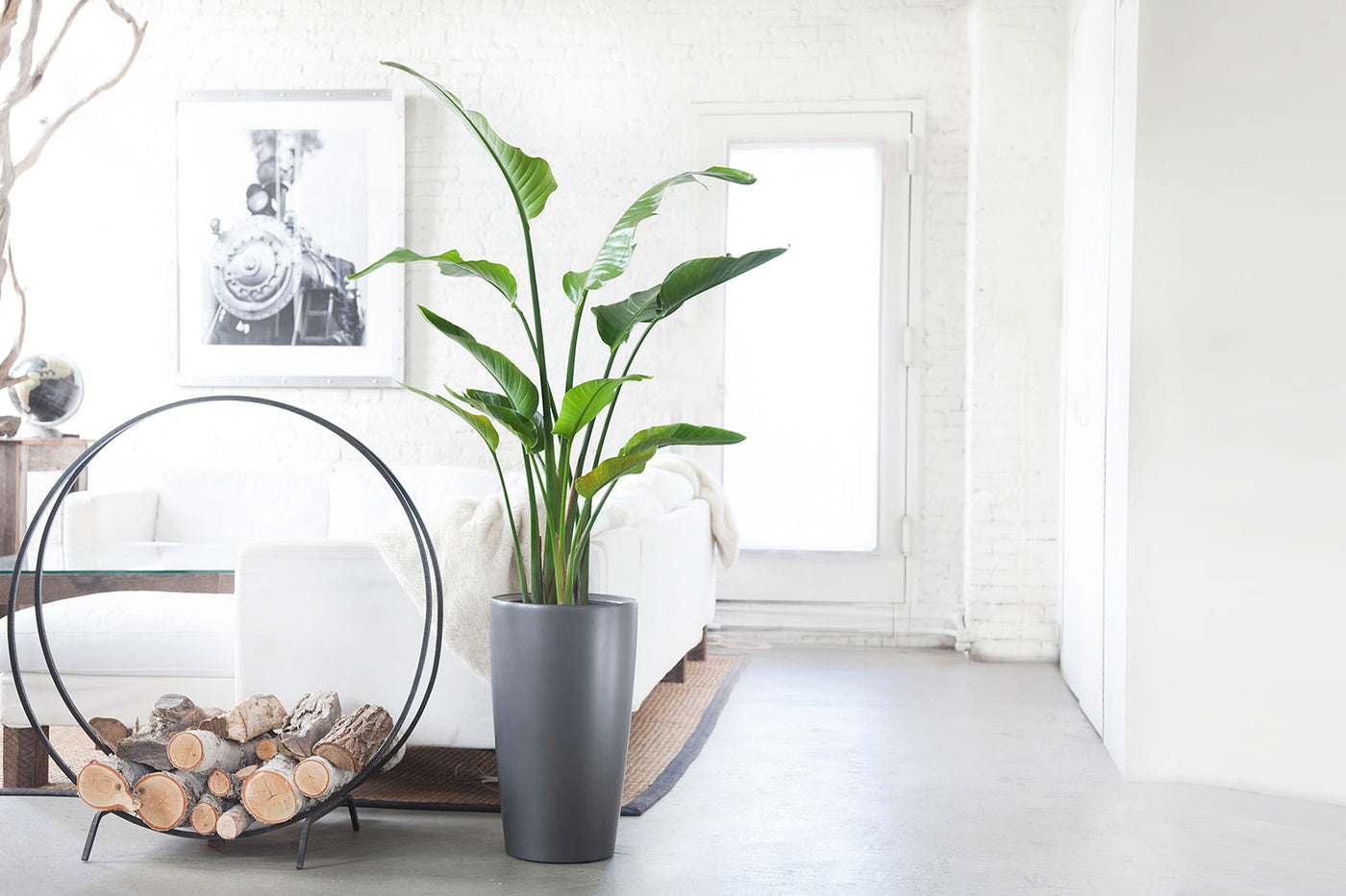 Indoor Plants Nyc Office And House Plant Delivery
