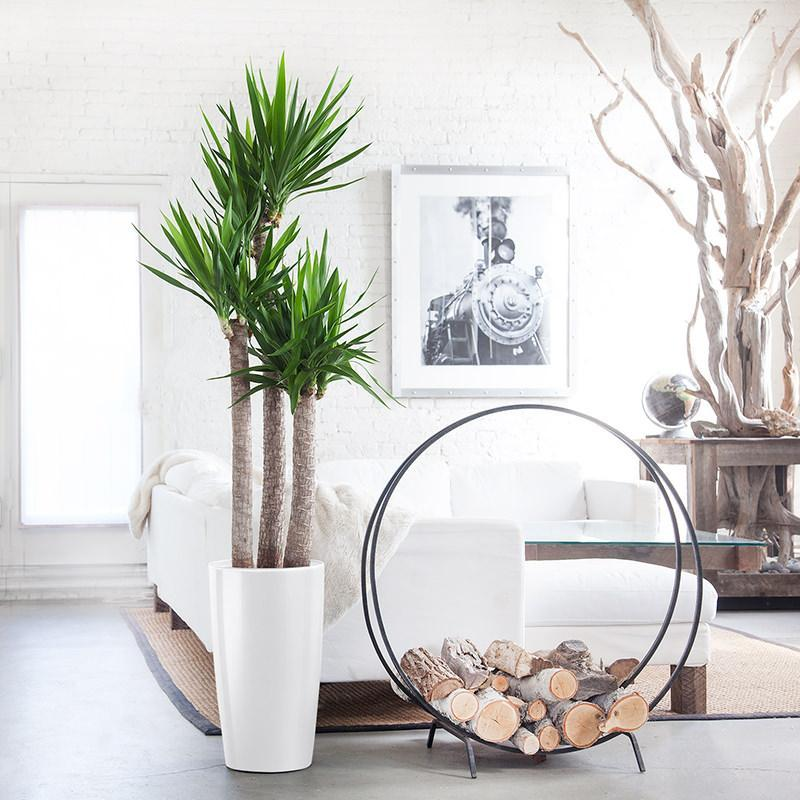 Plant Delivery NYC | Indoor Plant Shop In New York - My City