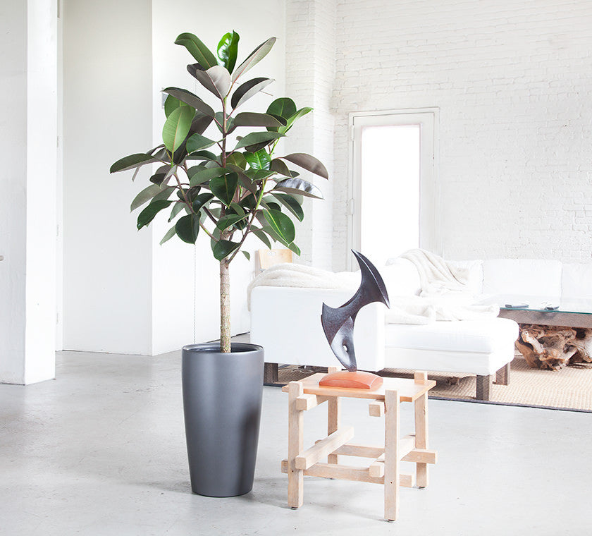 Indoor plants nyc office and house plant delivery for Office plants no natural light