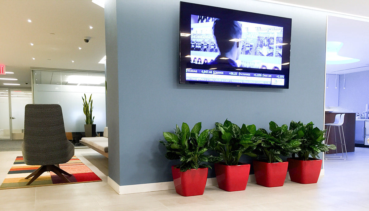 How To Choose Best Plants For Your Office
