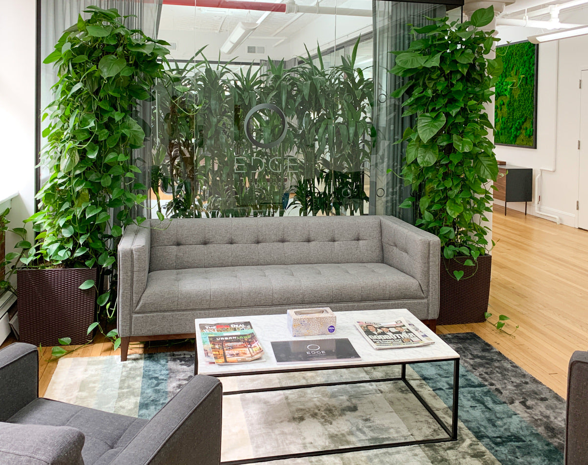 Office Plant Guide - My City Plants - New York