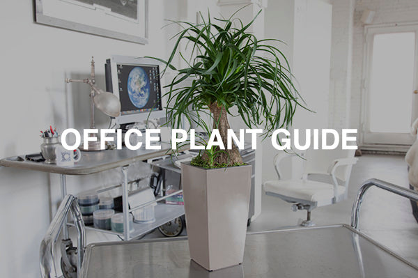 office plant guide