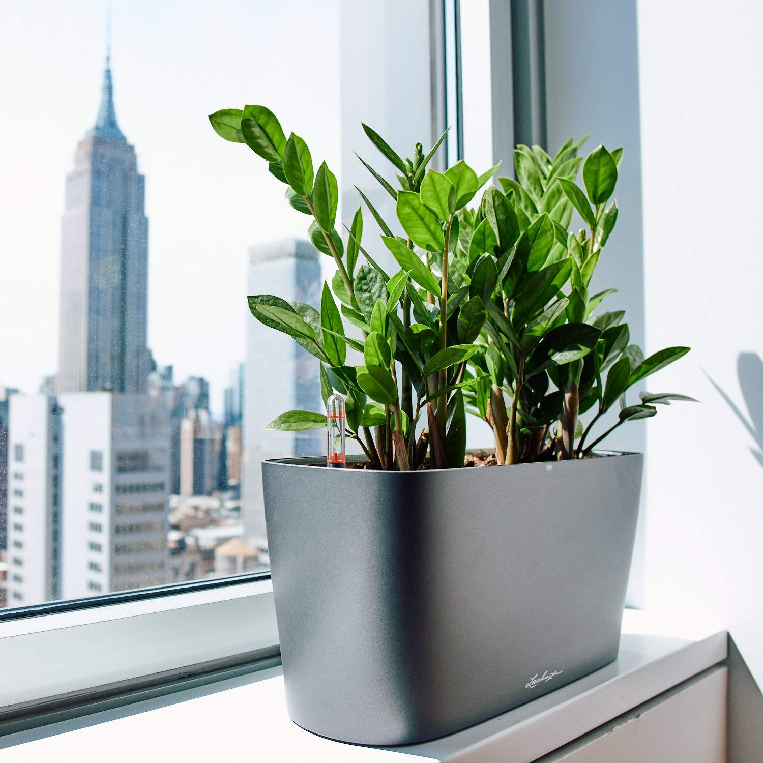 Office plant delivery NYC - Manhattan - Brooklyn - Queens - Bronx