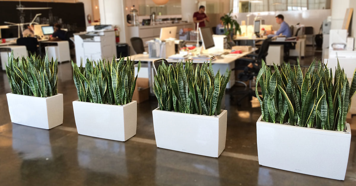 best office plants in New York