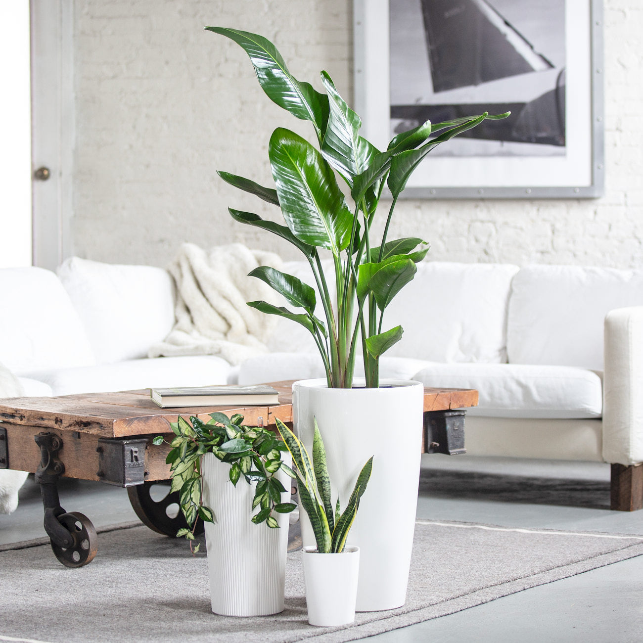 Plant Delivery NYC - My City Plants - Online Plant Shop