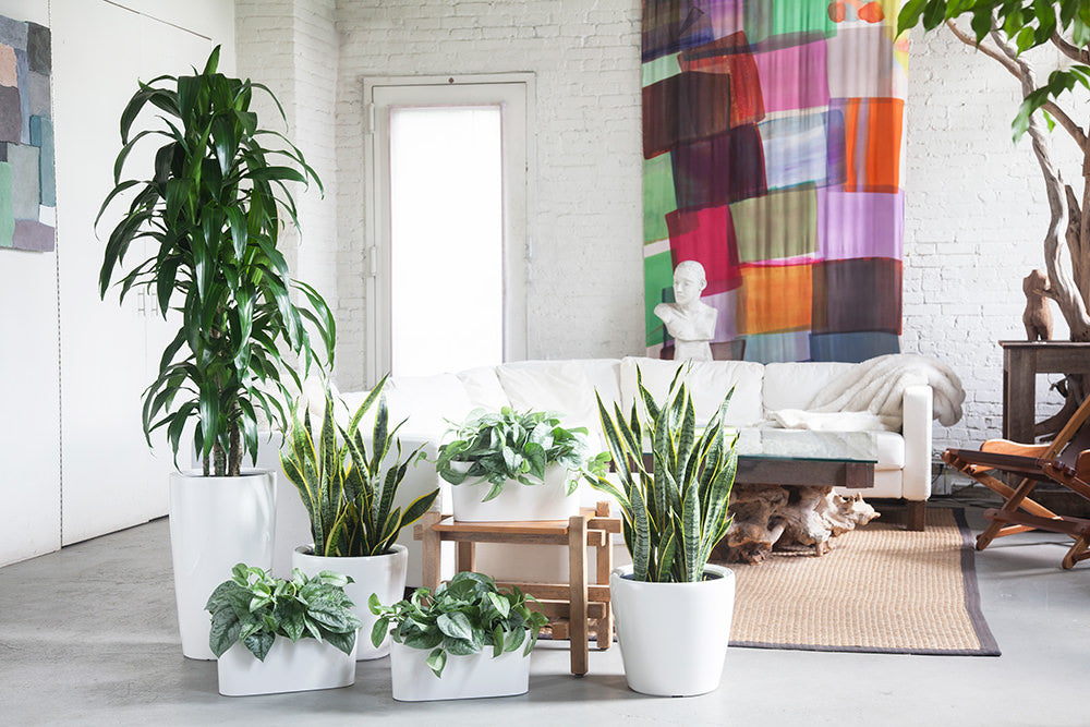 Factors to Considers When Evaluating Artificial Light for Your Indoor Plants.
