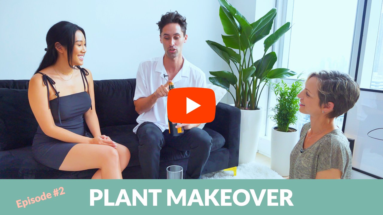 Plant Makeover For Fashion & Lifestyle Influencer Erica Luo
