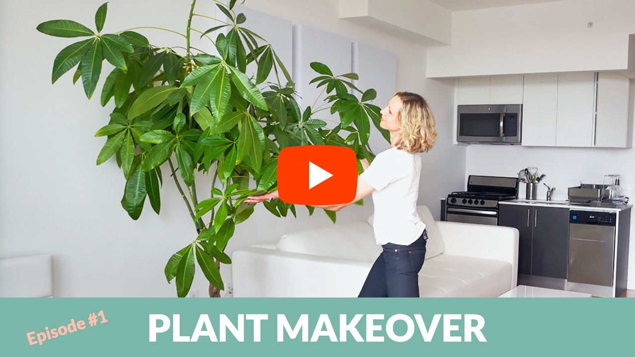 how to decorate studio apartment with plants