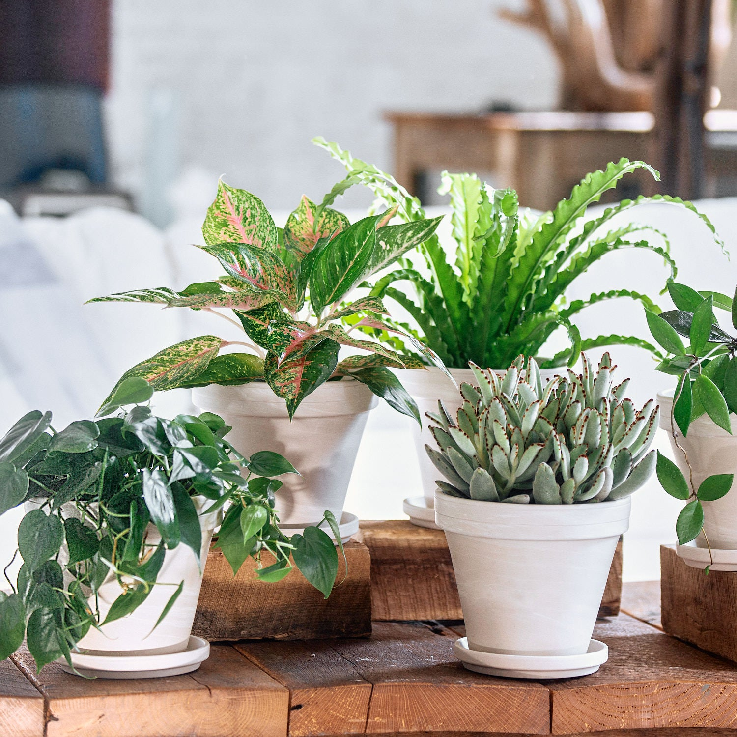 Plants in clay pots - houseplant delivery in NYC