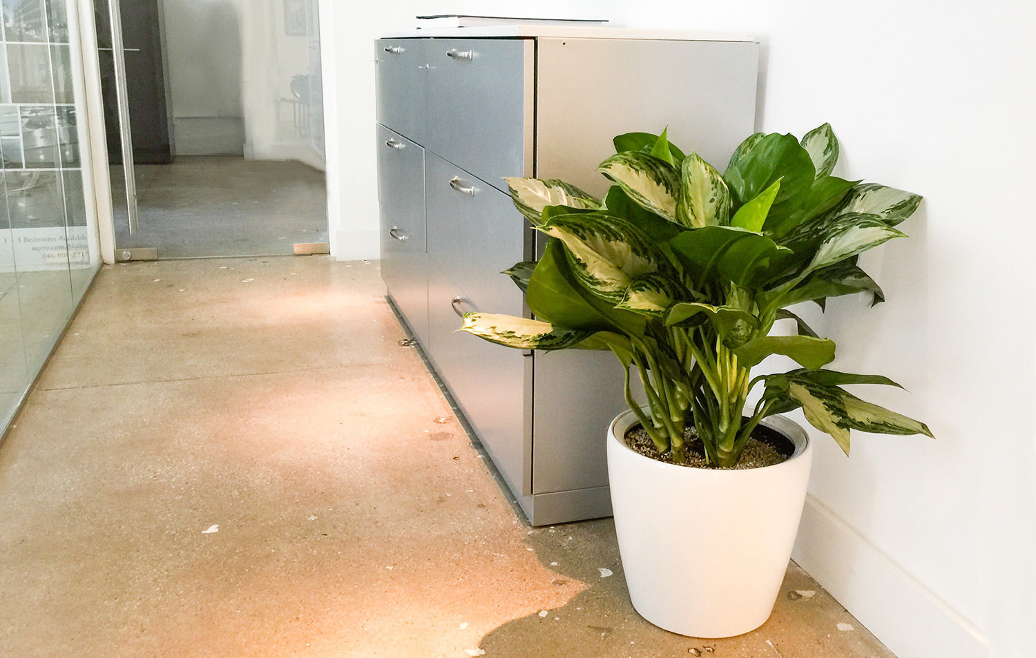 taking care of plants in an office