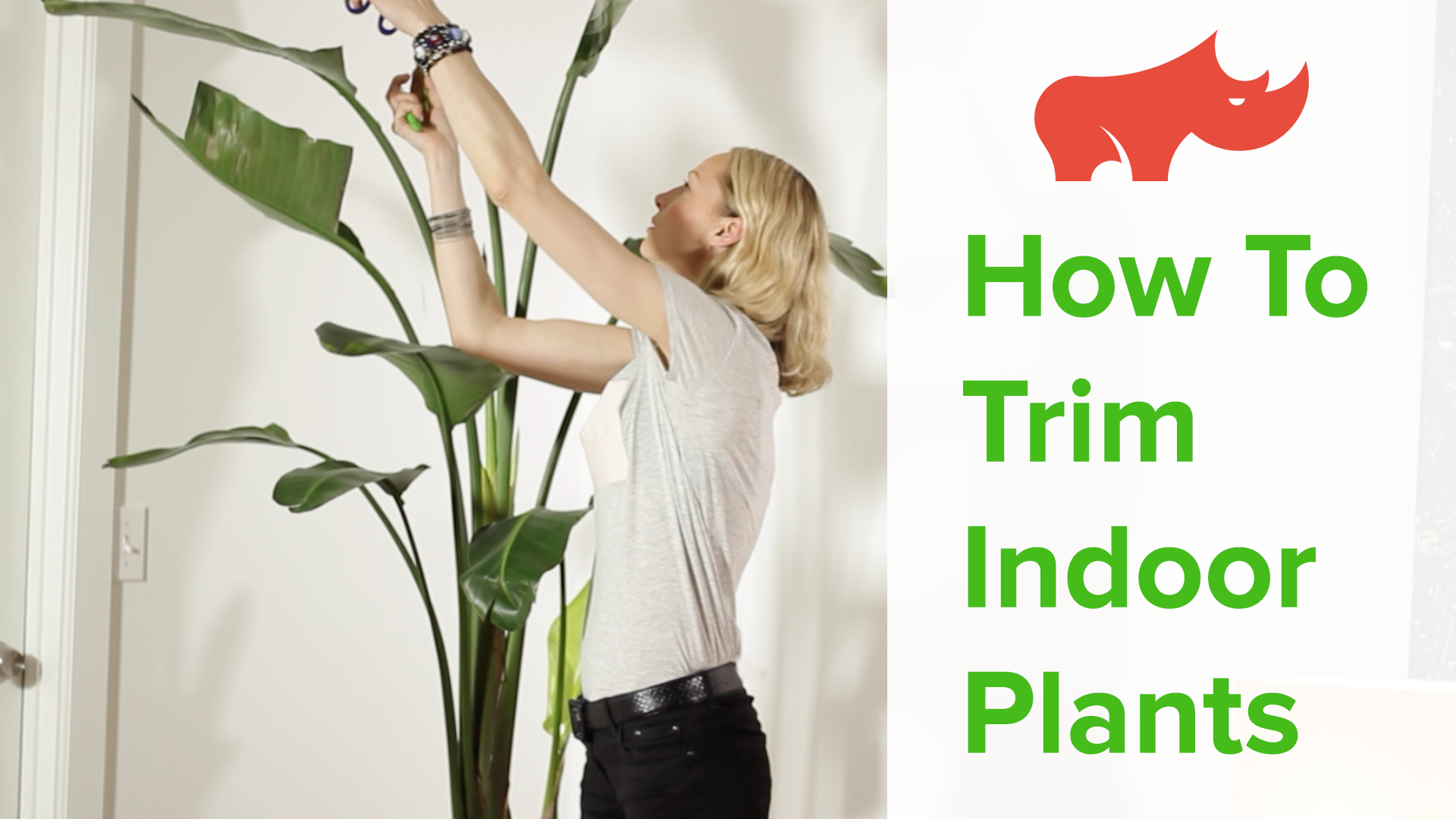 How to trim indoor plants