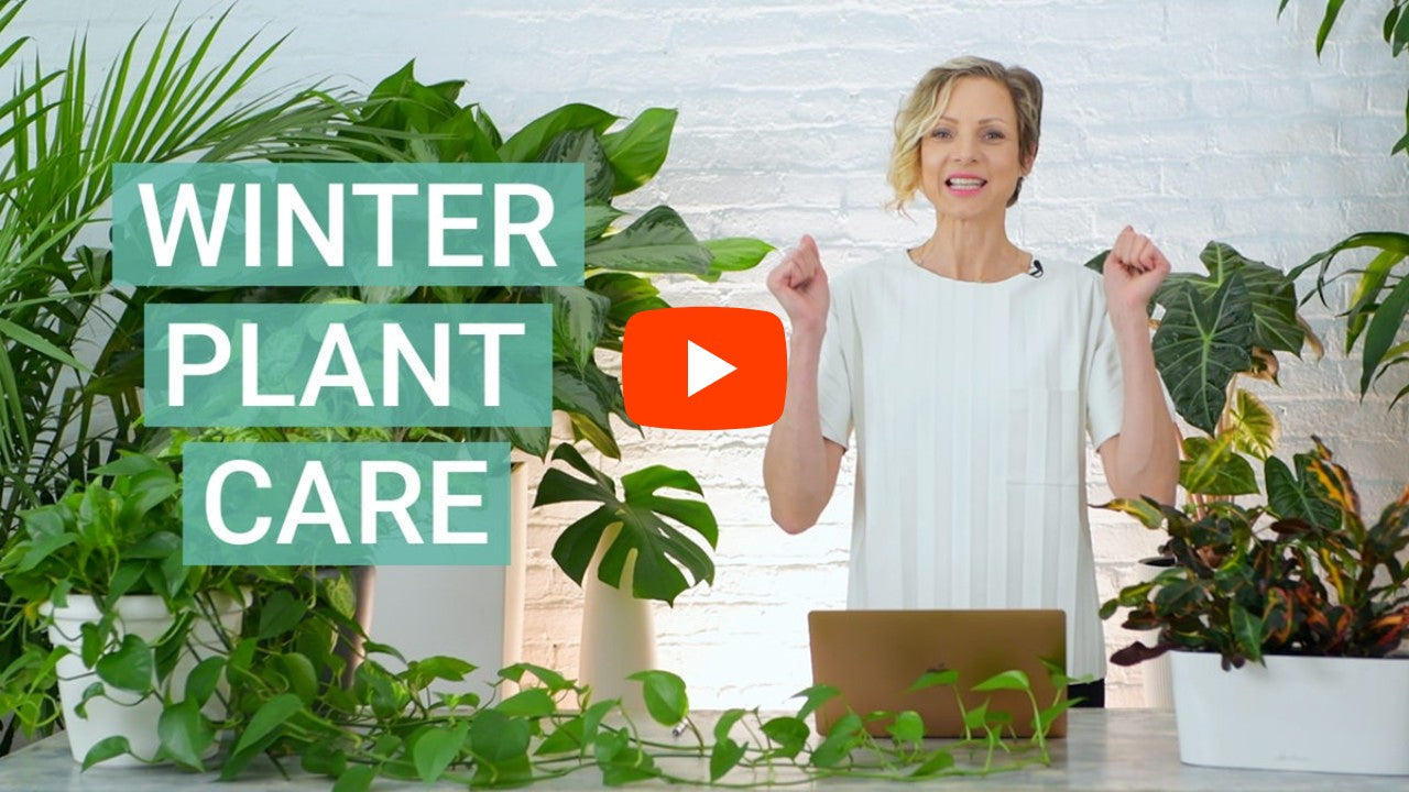 Winter plant care tips video