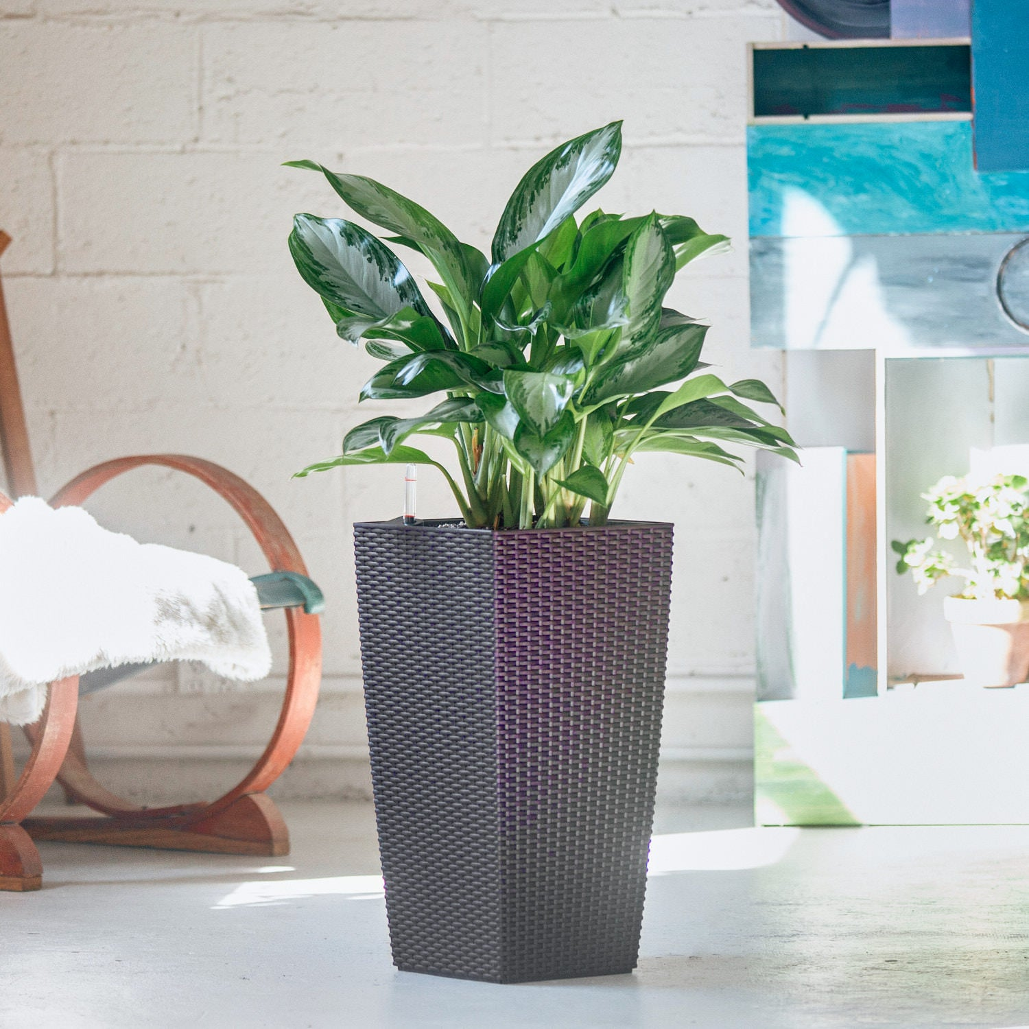 Aglaonema plant potted in Lechuza Cubico Cottage mocha planter - My City Plants